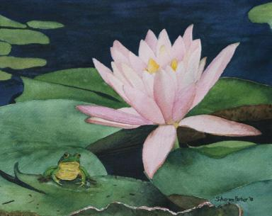 frog-and-water-lily-sharon-farber