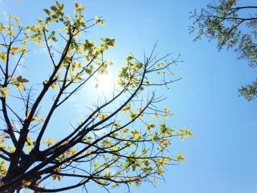 3069540-beautiful_blue-sky_fresh_leaves_life_nature_nature-wallpaper_sky_spring_sun_sunny_trees_weather