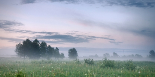 foggy-morning-in-a-meadow